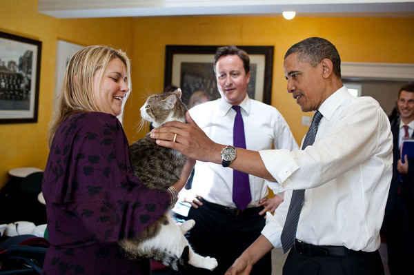 کامرون در حال معرفی گربه اش،