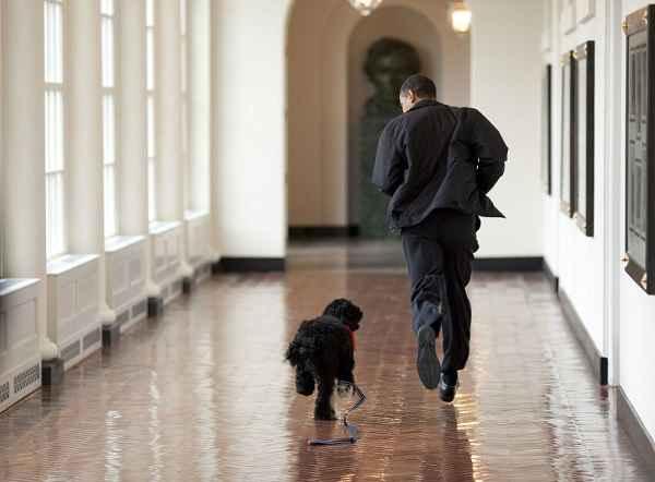 باراک اوباما و سگش