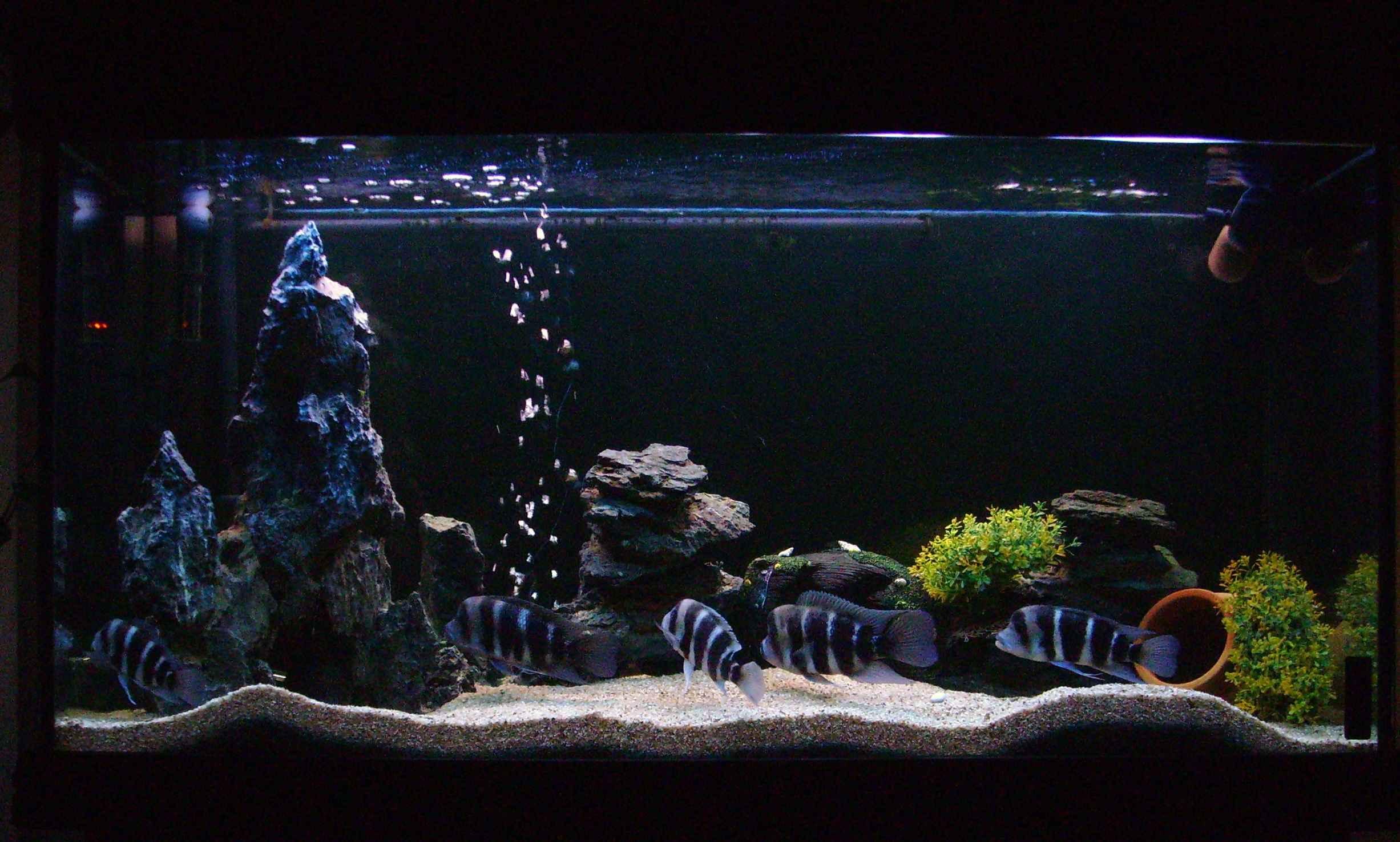 تصاویر ماهی فرانتوزا