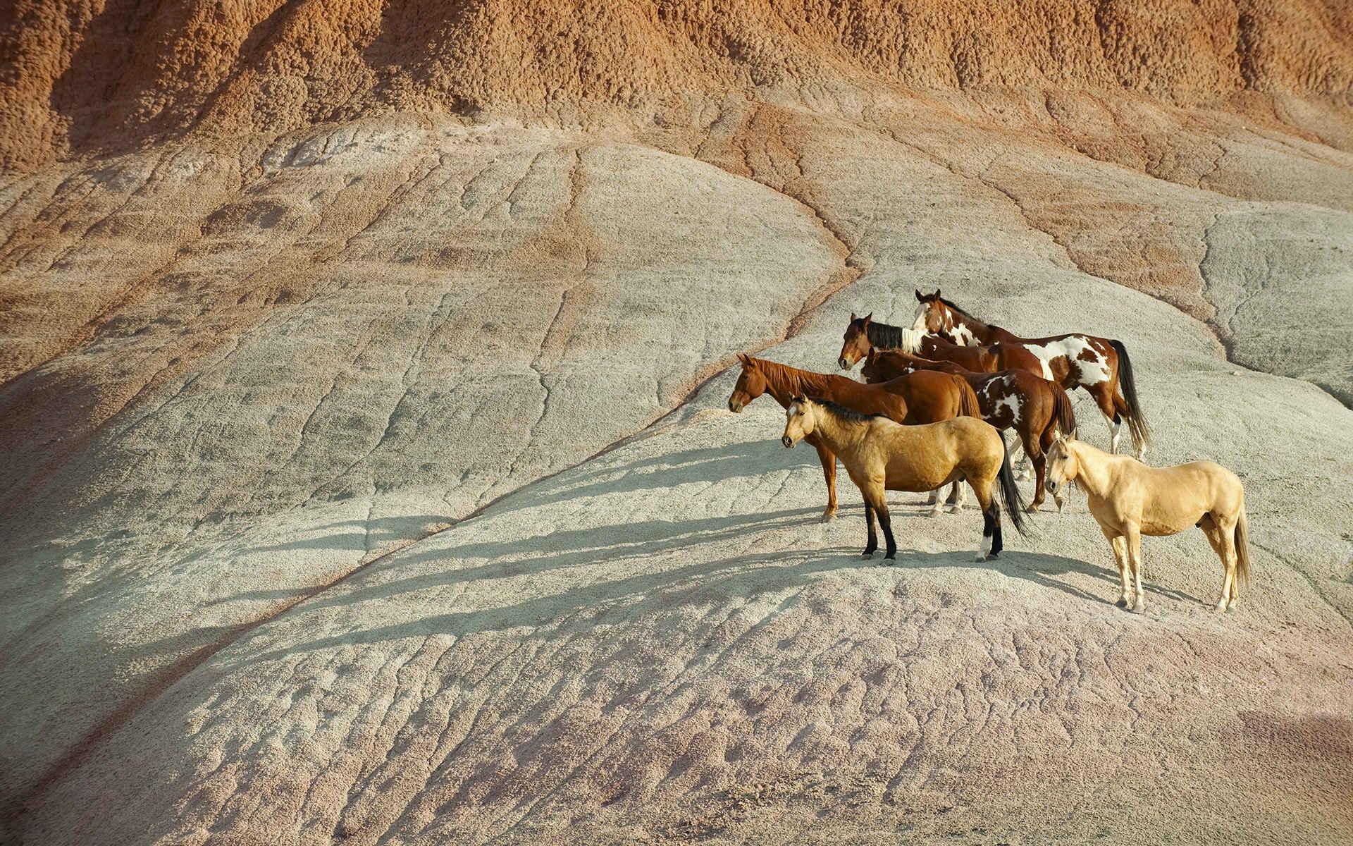 گالری HORSE